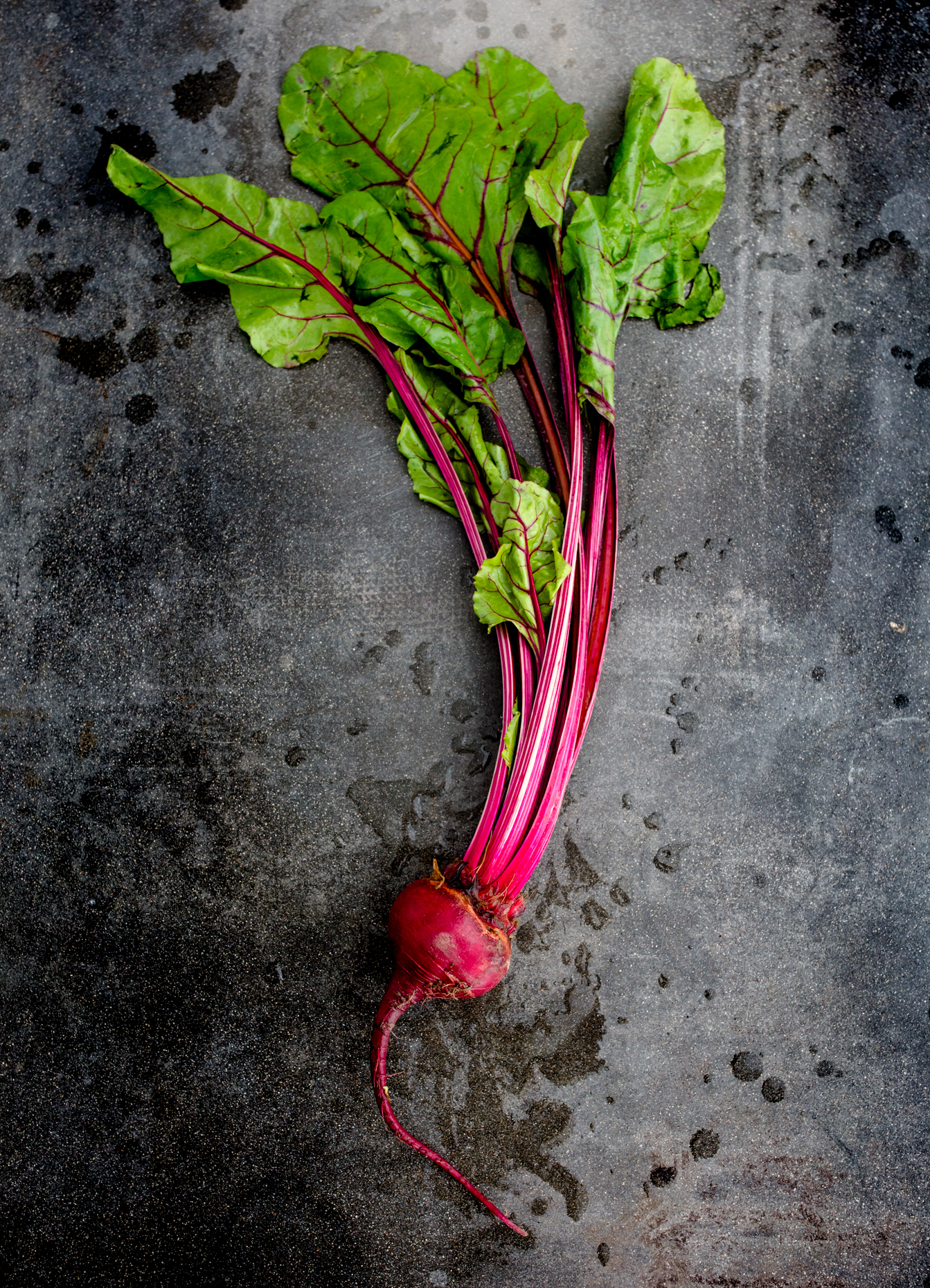 obc_3_beet_high_and_rising_0092